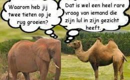 Dutch (toilet humor).
